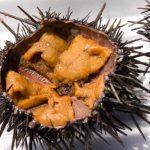 殻付きウニ・塩水ウニ・板ウニの特徴は?保存方法と賞味期限は?