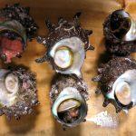 殻付きサザエの保存方法!賞味期限はいつまで?冷凍はできるの?